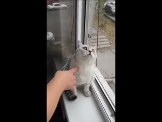 Кот завис