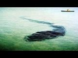 Гигантский подводный змей в Крыму.Карадагский змей.