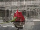 ♥Эдуард Асадов ★ Моя любовь *´¨`* ¸¸ ♫♥