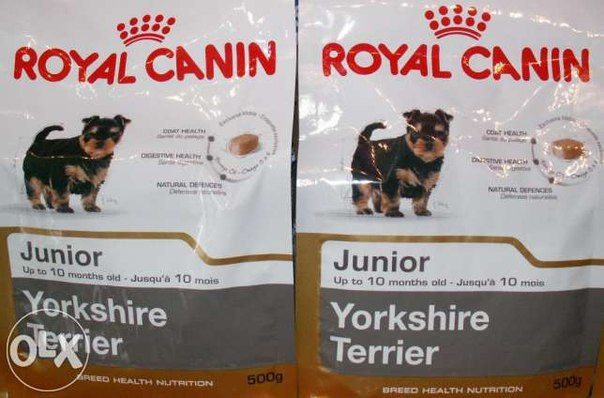 royal canin для йорка