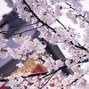 Фотопутешествие по Японии