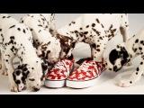 Disney | Vans - 101 Dalmatians