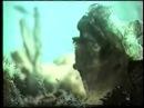 Многоклеточные животные. Тип Губки