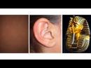 Коричневое ухо фараонов RYTP Source