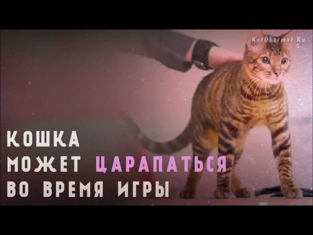 Как отучить котенка кусаться и царапаться - 10 советов