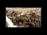 Качаем мед разнотравье июль 2015, пасека
