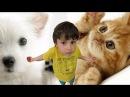 СТЁПИ БЛОГ - Домашние животные !
