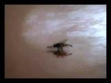 Муха и муравьи. ) укуренный оператор