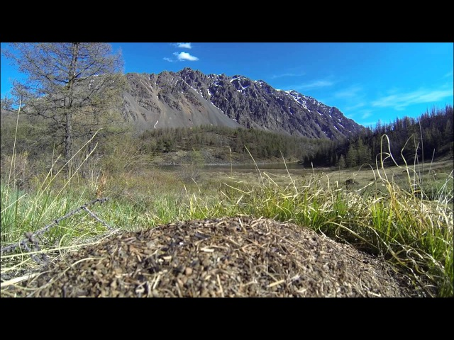 Алтай, Кош-Агачский район, Куюктанарские озера