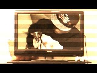 JDante - Precious Moments(Official Music Video)