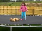 Батут! Прыжки на батуте вместе с котом! Прикол!