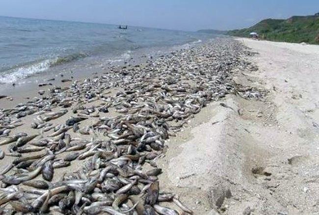 В Ростовской области начались первые случаи массовой гибели рыбы из-за жары