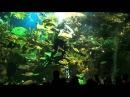 Шоу с акулами Океанариум в Санкт Петербурге