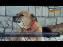 Что делать если напала собака Советы кинолога