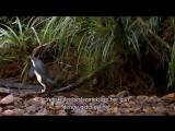 TRBelgesel_BBC.Natural.World.2014.Natures.Misfits