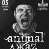 5.10 - Акустический концерт Animal Джаz в Туле
