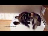 котята в коробке  Funny Cat Videos