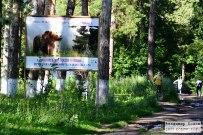 19 июля 2015 - Лес Автозаводского района Тольятти