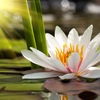 Студия йоги и медитаций в АЭРОБУСЕ