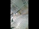 Умные попугаи, или Попытка бегства