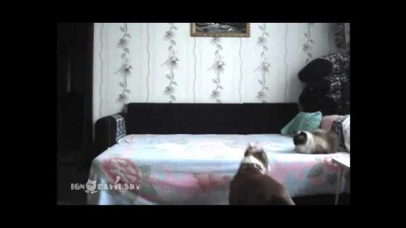 Этому псу запрещено находиться на кровати Хозяйка решила установить скрытую камеру и проверить что