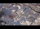 Mikael Tariverdiev - Winter (Relaxing music)