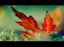 Max Denoise ft Anthya - ELUSIVE (Original Mix)