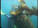 PADI Open Water Diver Глава 3
