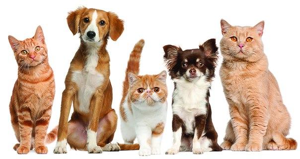 сообщения о животных из красной книги россии для 3 класса