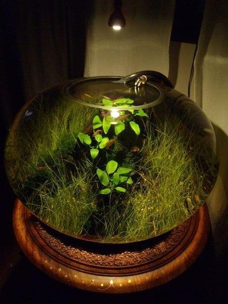 Как оформить круглый аквариум своими руками