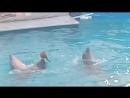 танец дельфинов Лелика и Болика
