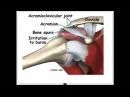 Плечевой сустав. Строение, функционирование, проблемы, решения