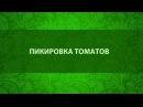 Пикировка томатов. Сайт Садовый мир