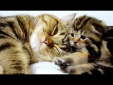 Mom Cat Talking to her Cute Meowing Kittens 20 min BONUS Video