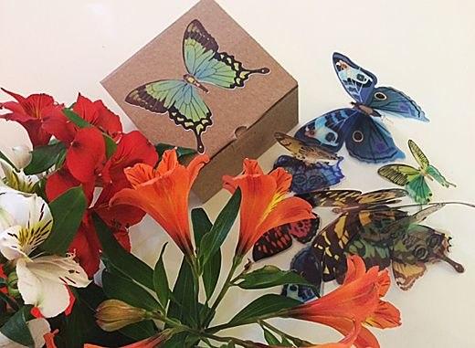 фото коробочка для бабочек наклеек объемных (3д)