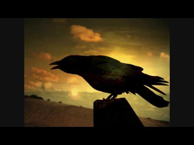 Scorpions Yellow Raven 1976 HD
