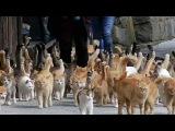 В Японии появился остров, на котором кошек больше, чем людей
