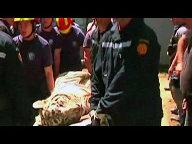 В Тбилиси белый тигр, сбежавший во время наводнения из зоопарка, напал на человека - Первый канал