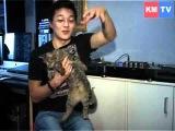 Амархуу Борхуу Мой кот - великий путешественник