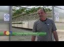 Выращивание земляники методом гидропоники