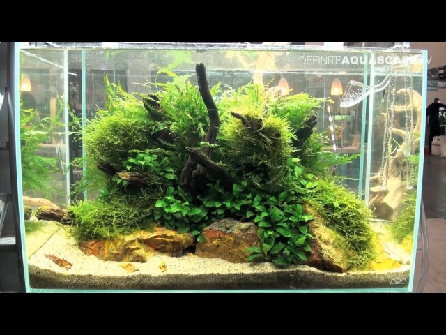 Planted aquariums of Heimtiermesse 2015, Hannover - part 2