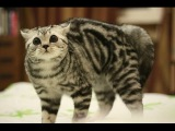 Funny Cats Fails Compilation - Happy New Year 2015