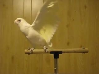 Когда они покупали попугая, то явно не ожидали от него такого.