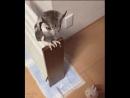 Owl transformation