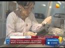 Кордицепс Казахстанские ученые утверждают что нашли рецепт долголетия