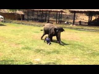Слон-охранник