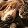 """Компания """" ЧЕМПИОН """" корма для кошек и собак"""