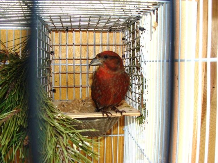 Фотографии моих птиц  - Страница 2 ZlHX-XOUErM