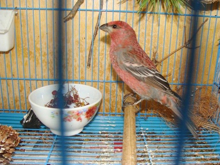 """Фотографии """"птичей комнаты""""  Npw1bi4Bl6A"""