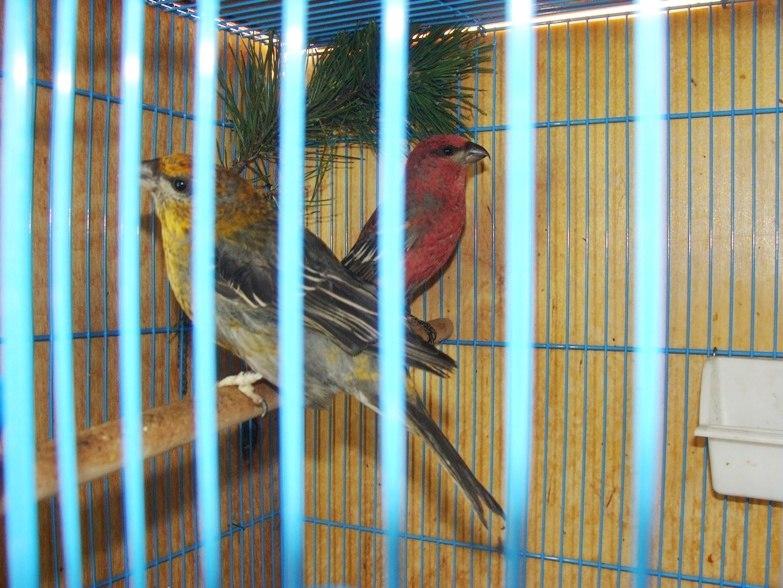 """Фотографии """"птичей комнаты""""  3QuA301bhrQ"""